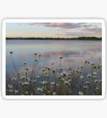Daisies on a summer evening at Winterset Sticker