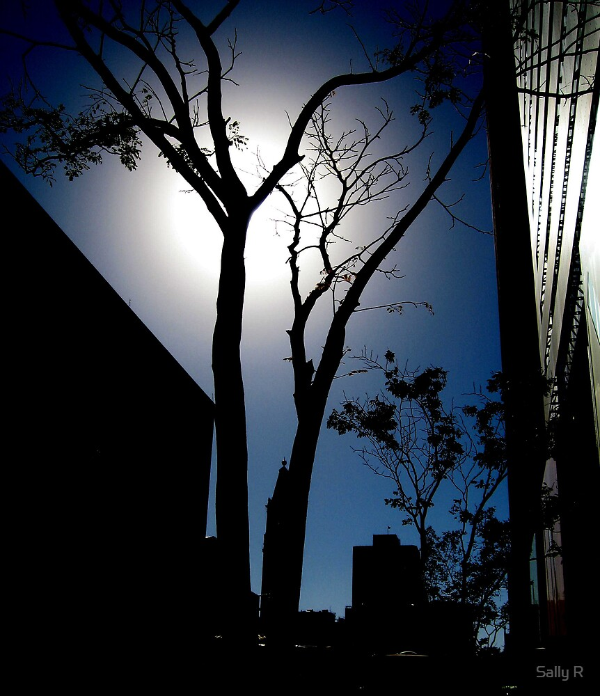 Twilight.............. by Sally R