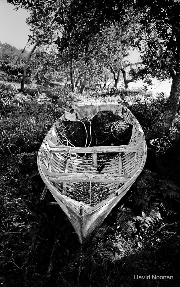 Driftwood by David Noonan