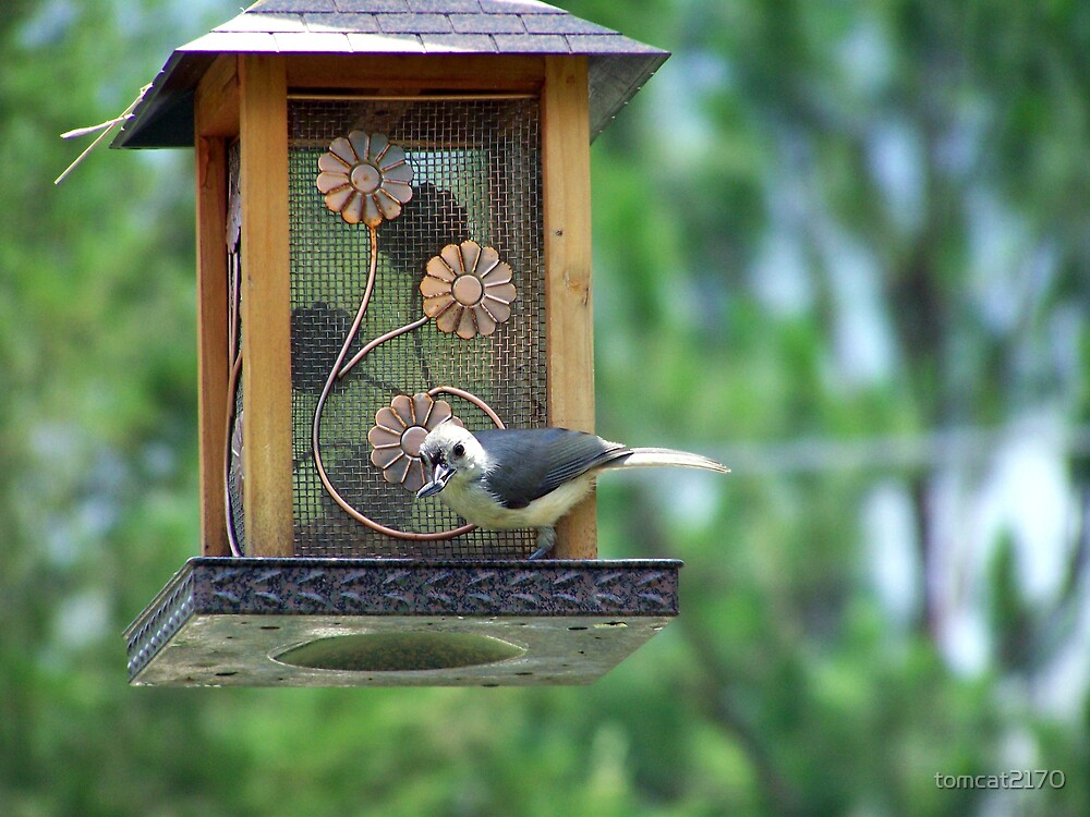 tufted titmouse by tomcat2170