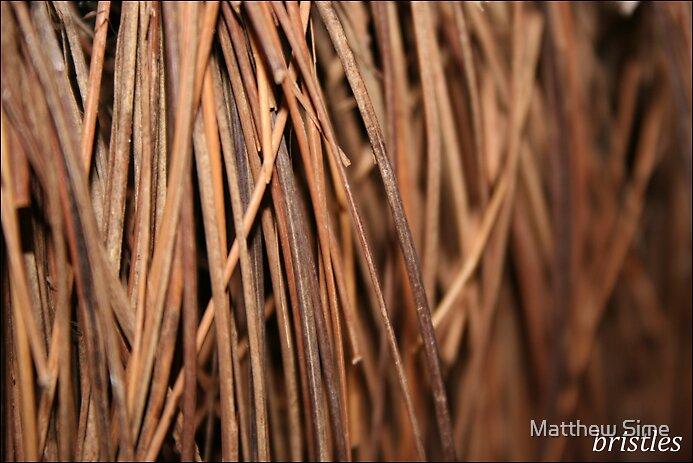 bristles by Matthew Sime