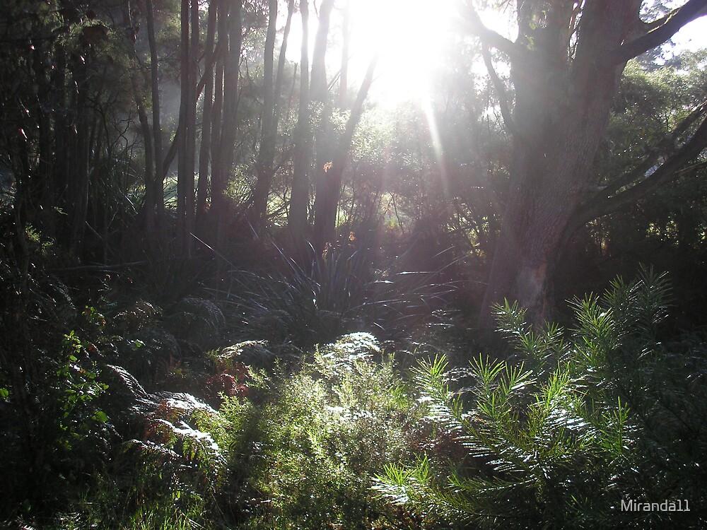 Early light by Miranda11