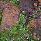 Stone and moss  by Miranda11
