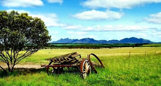 Splender in the Grass by Craig Shillington