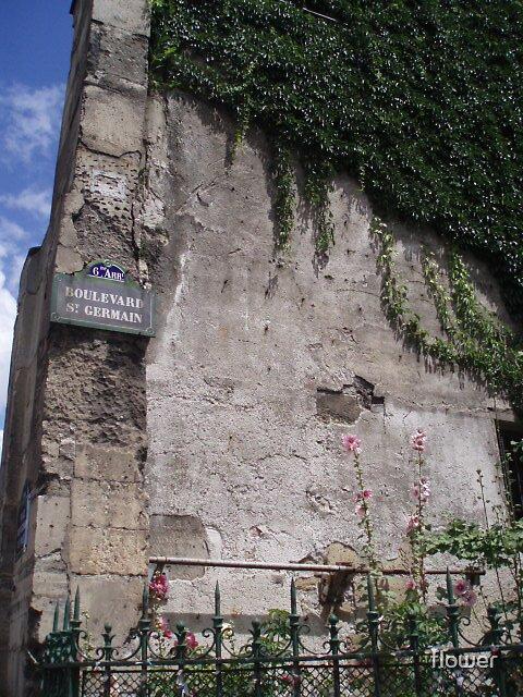 St- Germain by flower