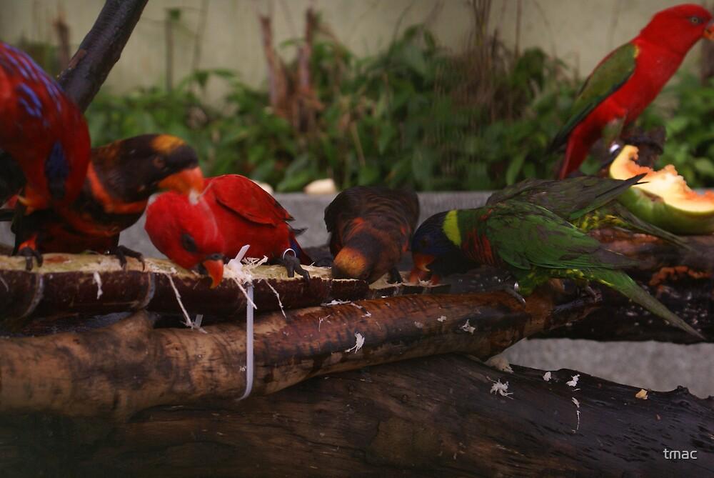 Singapore - Sentosa Birds Eating 1 by tmac