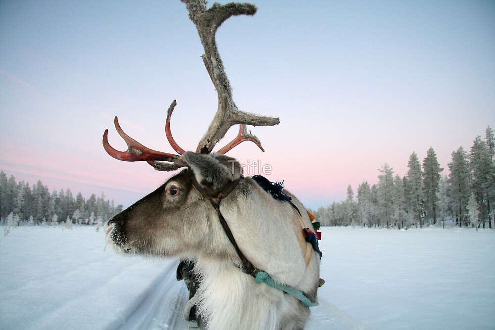 Lapland Reindeer by Trifle