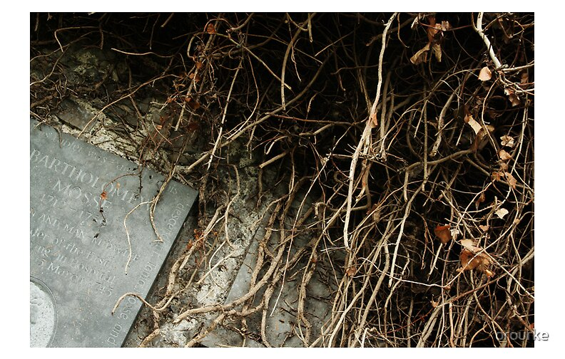 """Overgrown"" by orourke"