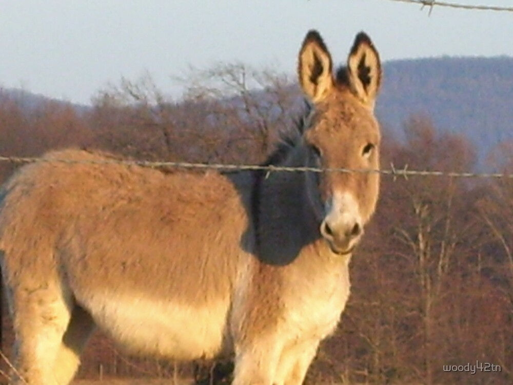 Donkey pose by woody42tn
