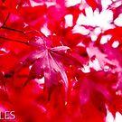 Fall is still here in November... by Larry Llewellyn