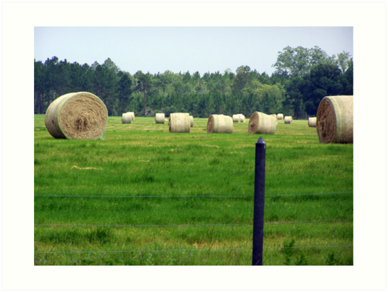 hayrolls by tomcat2170