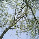 bent over branches by oilersfan11