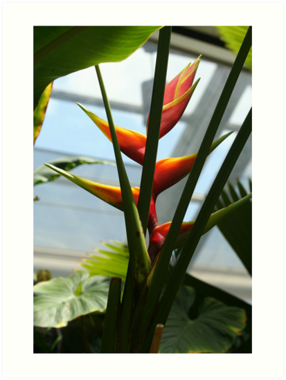 Tropical Flower by flowercityphoto