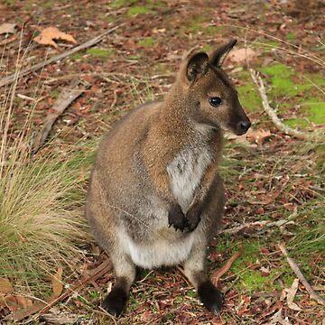 Meet the Locals - Launceston, Tasmania by BonnieMadeThis