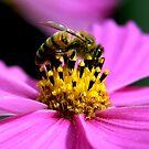 Pollen Count by Leeo