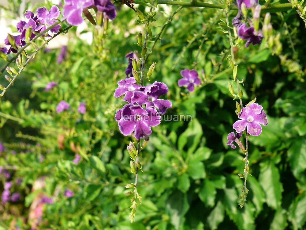 Violet Whisper by Jennel Swann
