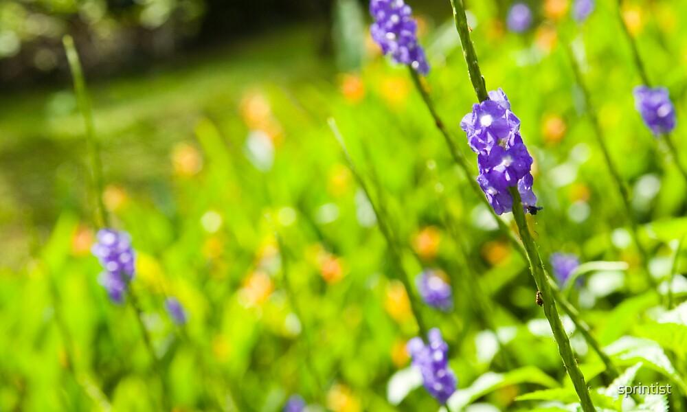 plant by sprintist