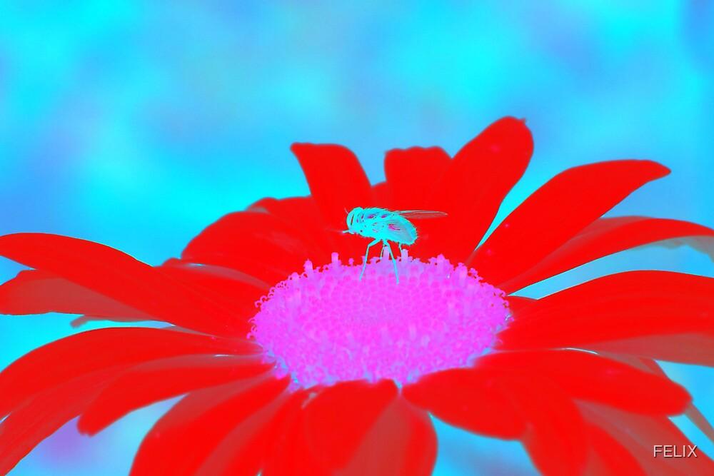 Flower Fly by FELIX