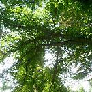 ton of leaves by oilersfan11