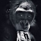Primordial Thinker by Dennis Stewart