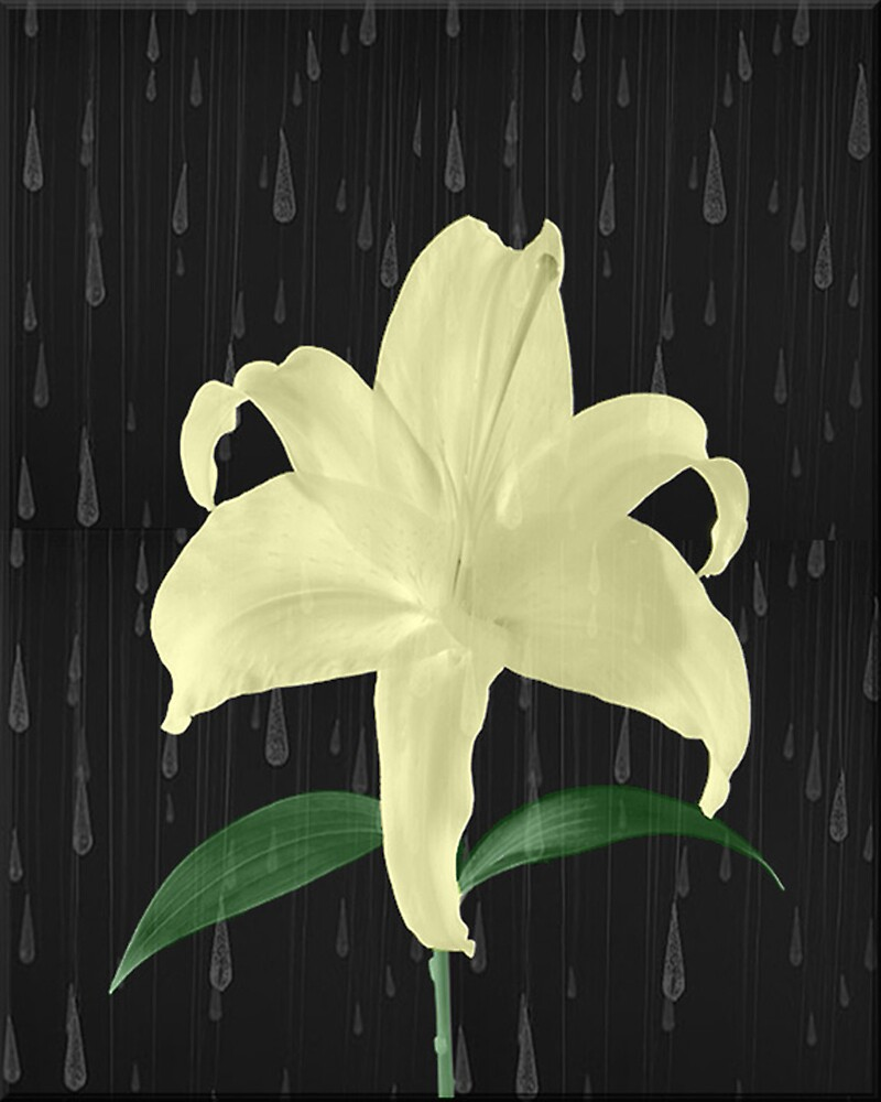 Lily in the Rain by pr1konnect