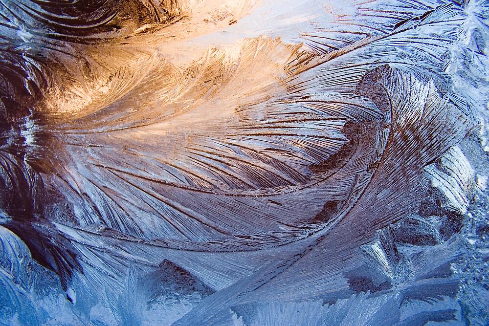 Frozen Beauty by Paul Szymiczek