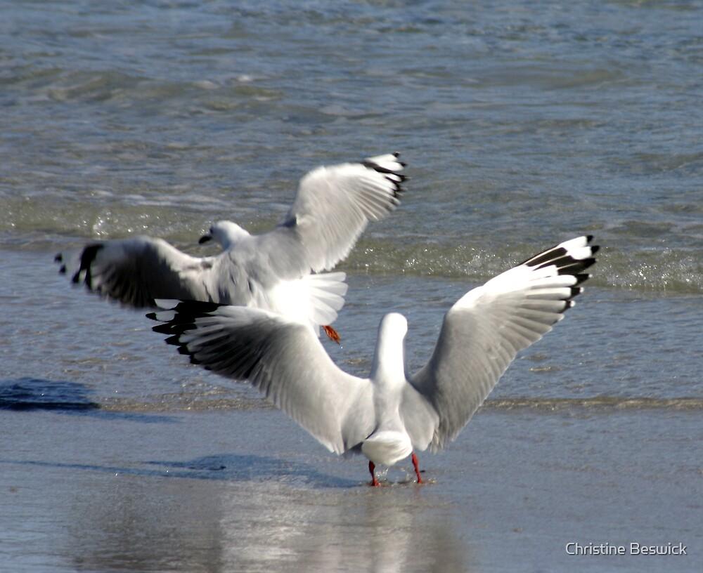 Dancing gulls by Christine Beswick