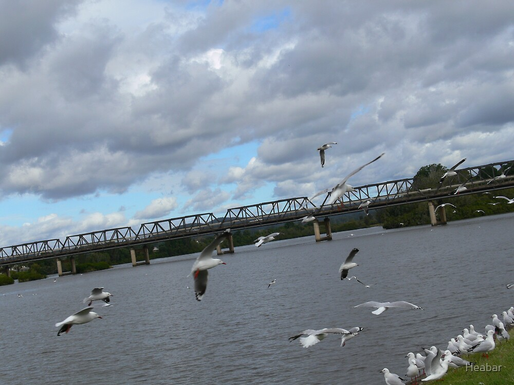 Seagulls on the Manning River Taree. by Heabar