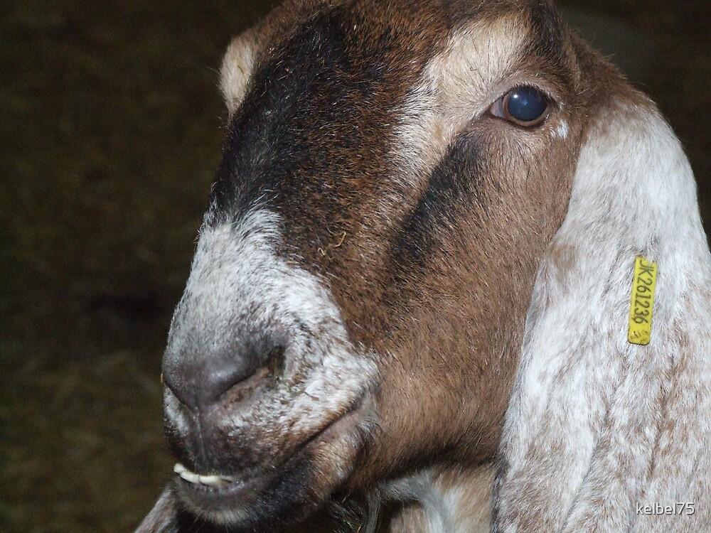Goat by kelbel75