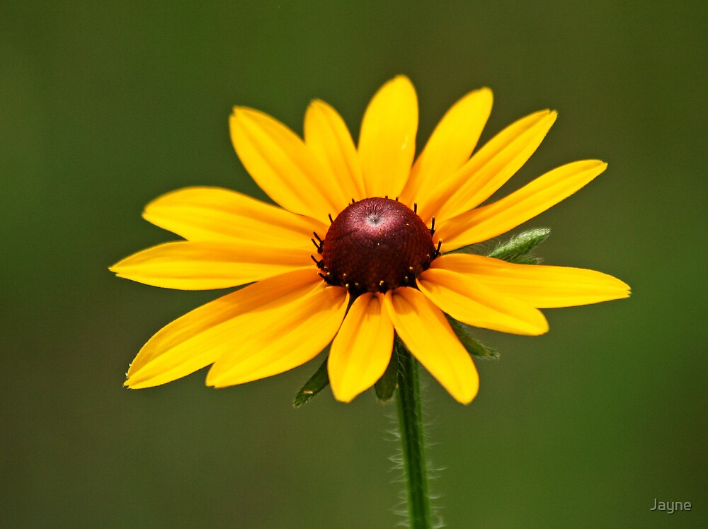 Woodland Flower by Jayne
