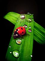 Green & Red by Cliff Vestergaard