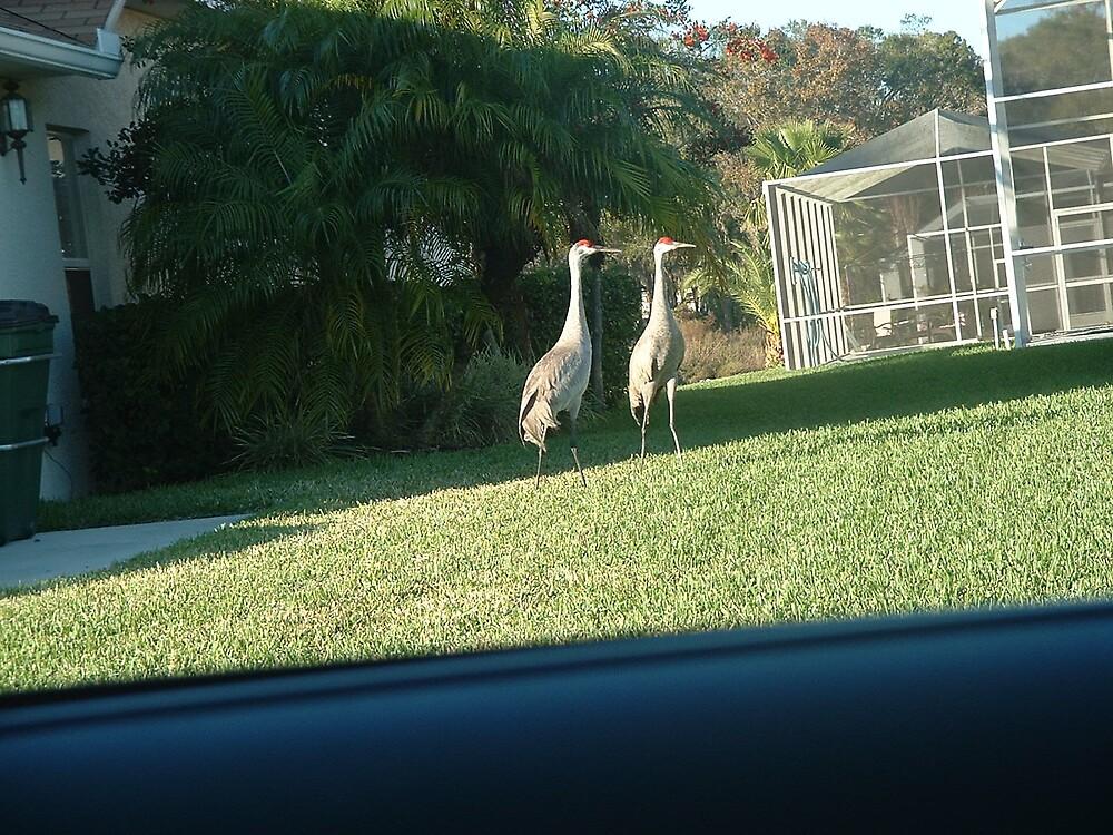 Floridian Cranes by Dori920