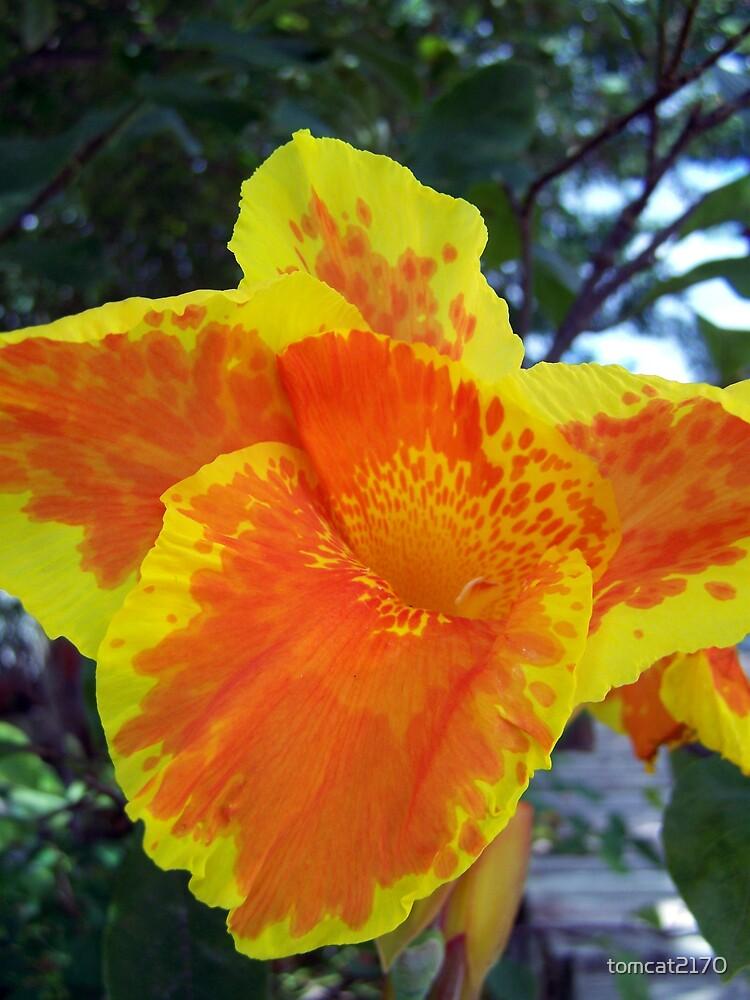 orange lilly by tomcat2170