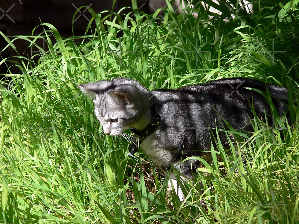Hunting in the tall grass by Sandra Chung