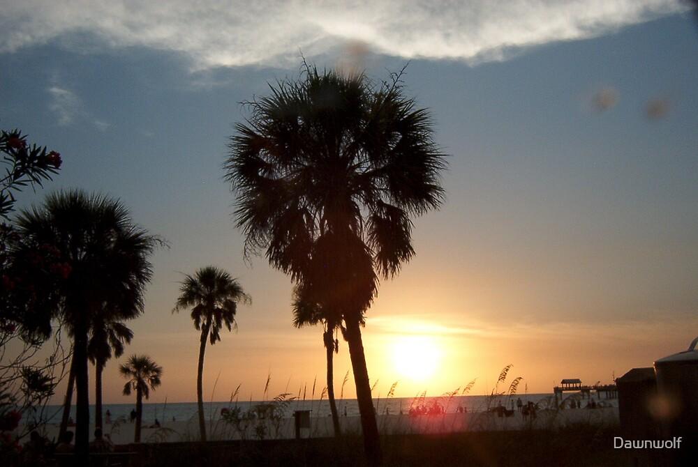 Palm Tree Sunset  by Dawnwolf