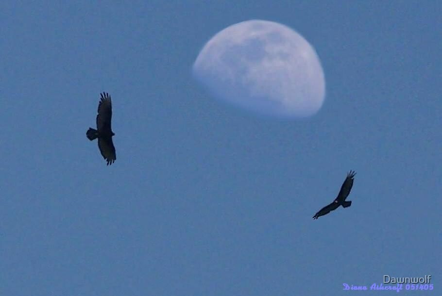 Moonhawks  by Dawnwolf