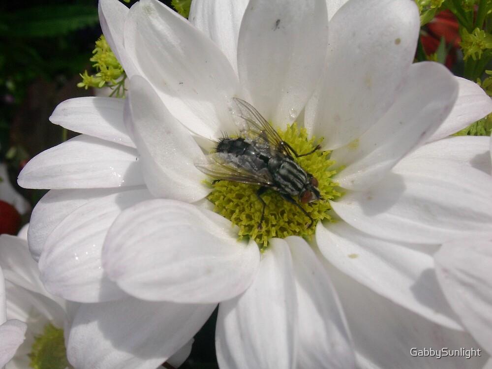 Fly on a daisy.. by GabbySunlight