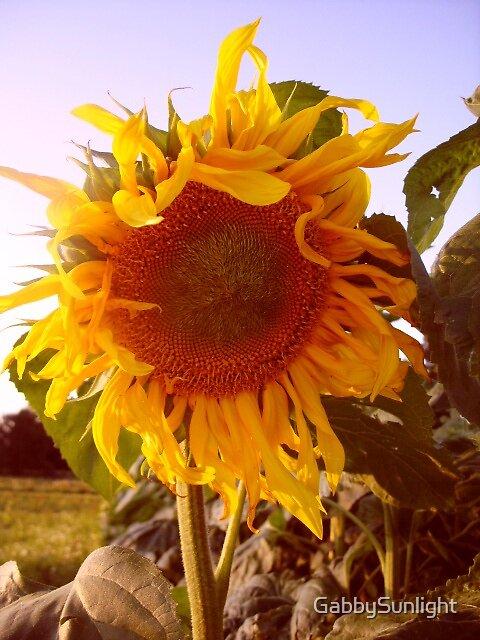 Sunflower Smile by GabbySunlight