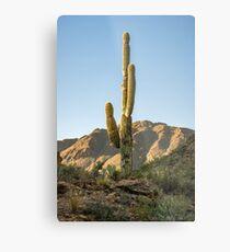 Lonley Cactus in Saguaro National Park Metal Print