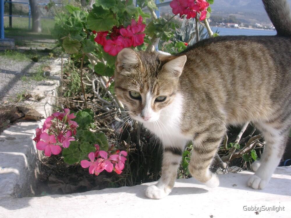Greek Cat by GabbySunlight