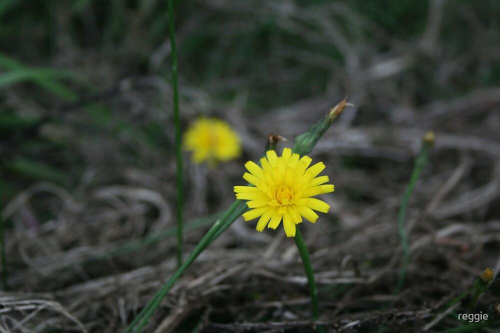 yellow flower by reggie