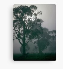 gums in the mist Canvas Print