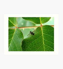 Fruit Fly Art Print