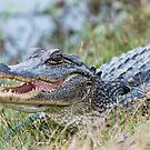 Toothy Grin by Bonnie T.  Barry