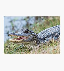Toothy Grin Photographic Print