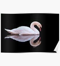 Swan at Sundown Poster