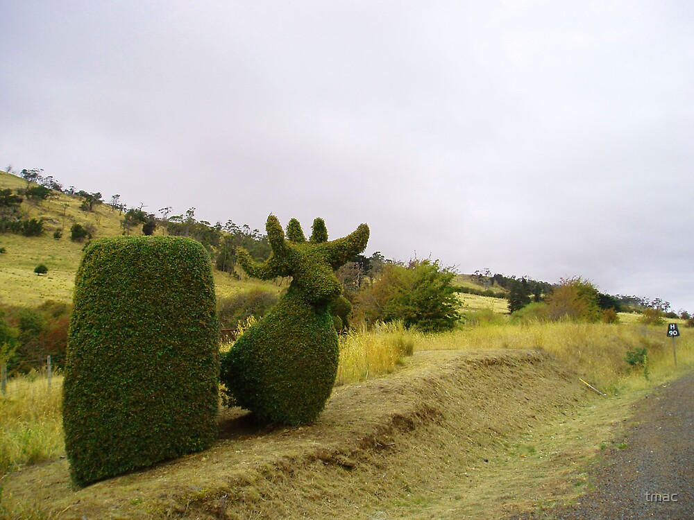 Tasmania - Along The Road - Hedge Animal by tmac
