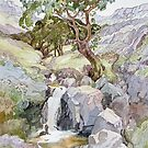 In the Rhinogs by Anne Bonner