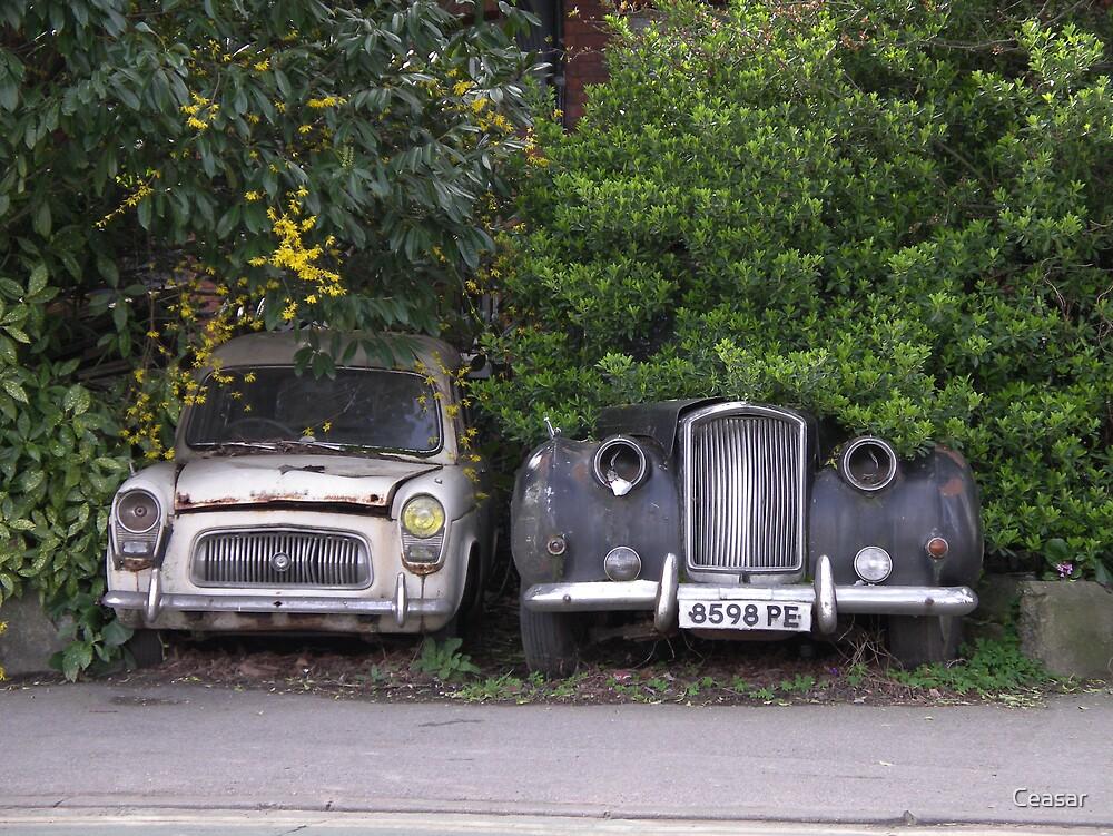Vintage Cars by Ceasar
