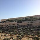 Israel wall surrounded by trees by Barberelli